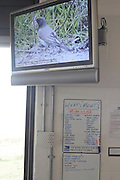 Daily information board and wildlife film provided for RSPB bird ornithologists at Rainham Marshes, reserve.