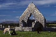 Burren, Kilmacduagh monastery.