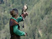 Austria, County of Salzburg, Hohenwerfen Castle, Birds of Prey Show, falconer with a falcon