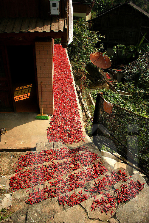 Drying chili process in Ping'an area, Guangxi, China, Asia
