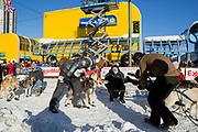 Mats Pettersson framför TV-kamerorna vid den ceremoniella starten av 2017 Iditarod, Anchorage, Alaska, USA
