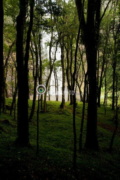 A vegetacao de mata atlantica na Cachoeira do Salto da Santa Rosa, localizada na cidade brasileira de Tibagi no estado do Parana. /The Atlantic Forest vegetation in the Waterfall Salto da Santa Rosa, located in the city in the Brazilian state of Parana Tibagi.