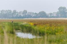 Witmarsum, Fryslân, Netherlands