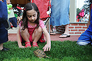 20110719 - Cedarhurst, NY - Daniella Weingarten, 5, plays with a tortoise at the third of the Cedarhurst summer concert series at Cedarhurst Park in Cedarhurst, NY. Photo by Isabel Slepoy / LI Herald