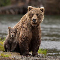 """Youth yet unborn will pole up the Missouri with Lewis and Clark, or climb the Sierras with James Capen ""Grizzly"" Adams, and each generation in turn will ask: Where is the big white bear?"""