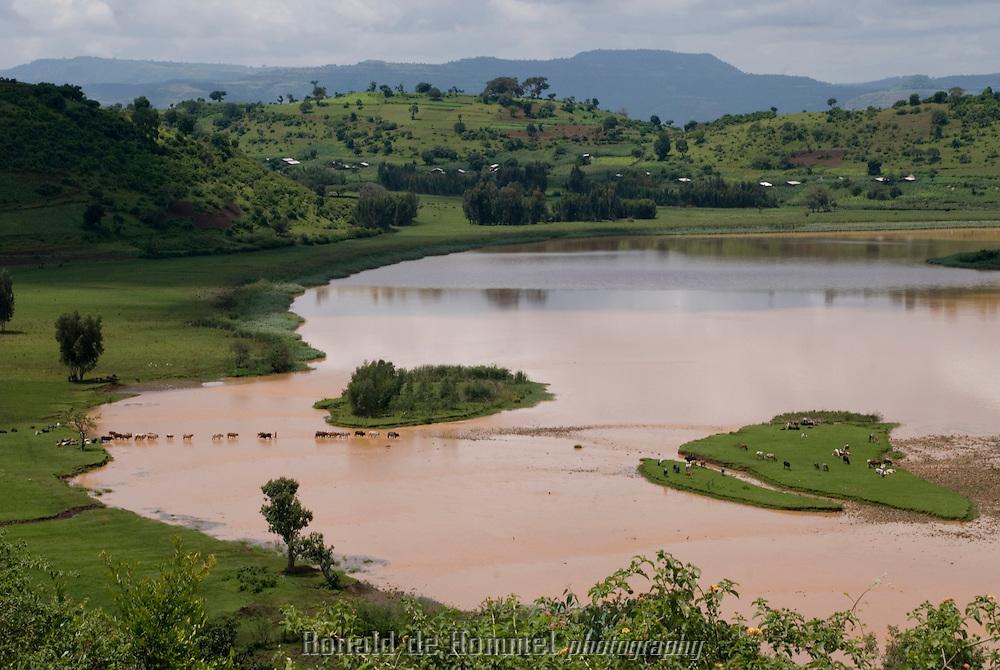 À l'est de Bahar Dar, au pied de la colline de Bezawit, agriculteurs, éleveurs et hippopotames se partagent le Nil.