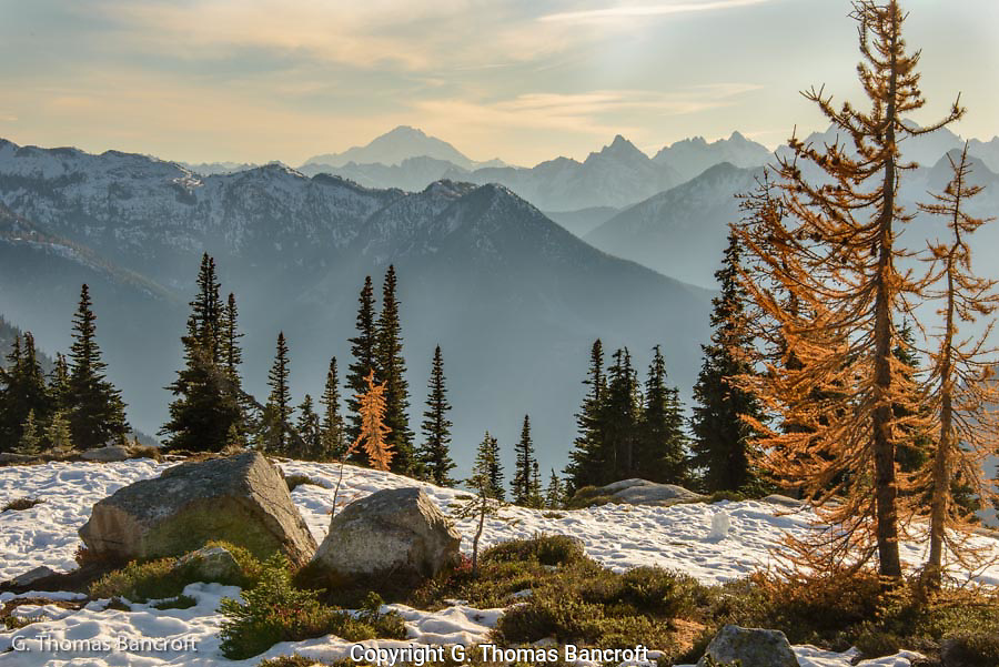 The golden western larches provided a good frame for looking south to Glacier Peak, one of the stratovolcanoes in Washington.