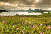 Alaska Southwest, Billowing storm clouds and blooming fireweed surround Nuyakuk Lake.