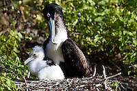 Animals, birds, mother with baby.<br /> 6466