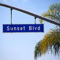 USA, California, Los Angeles. Sunset Boulevard street sign and palm in Hollywood.