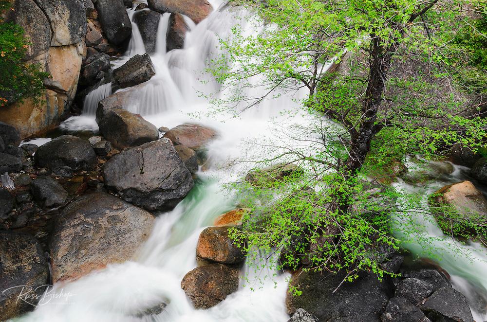Cascade Creek, Yosemite National Park, California USA