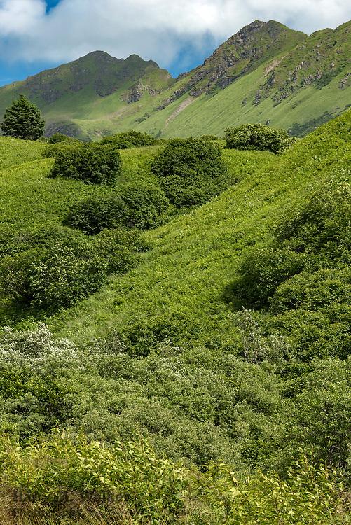Verdant hillside approximately midway on Pasagshak Road; southeast Kodiak Island; Alaska