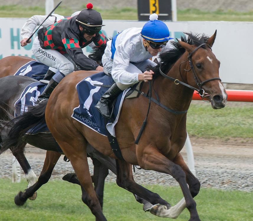 Risque ridden by Mathew Cameron wins the New Zealand Bloodstock 43rd 1000 Guineas  Riccarton Racecourse, Christchurch, New Zealand, Saturday, 14 November, 2015.  <br /> Credit:SNPA / David Alexander