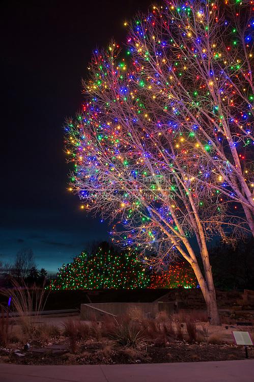 BOL lumenscape<br /> blossoms of light