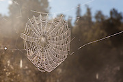 Spiderweb in morning light along Lake Matheson, New Zealand