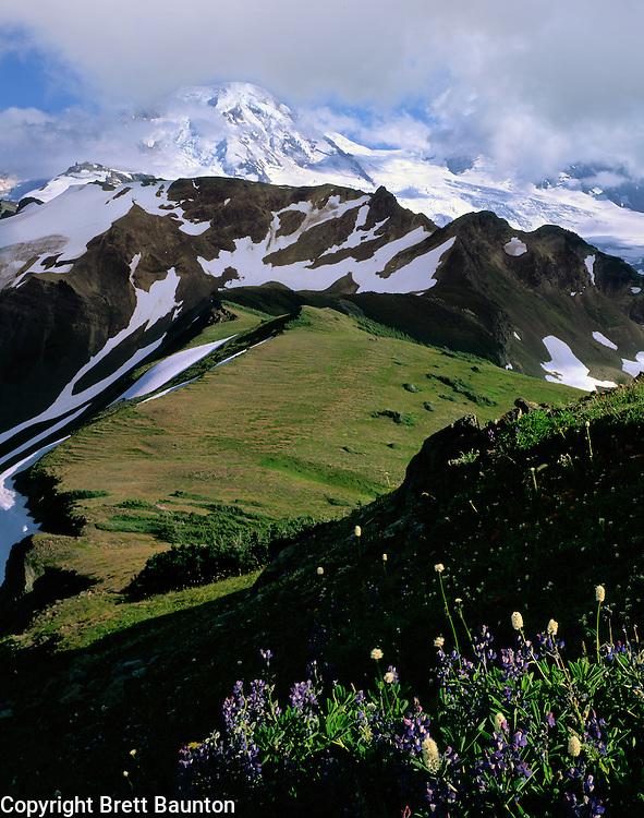 Mt. Baker, Skyline Divide, Wildflowers, Lupine, Bistort,