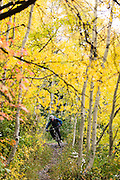 Scott House of White Pine Touring rides through a tunnel of aspens. Deer Valley, UT for Freehub Magazine.