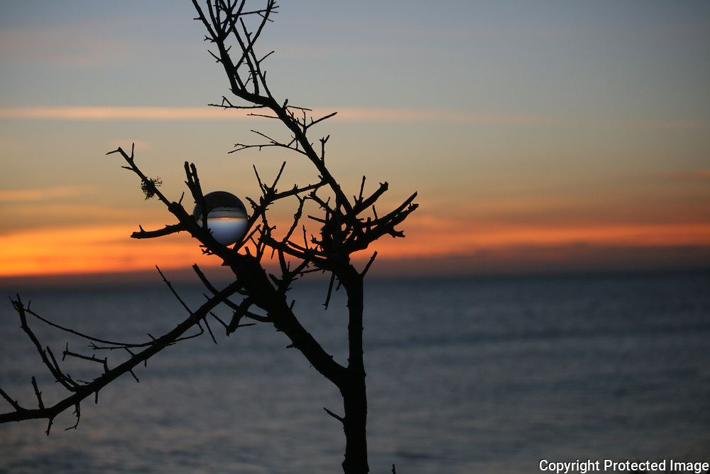 Crystal ball in tree at sunset
