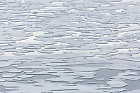 Pack ice in Storfjorden forms a simple design composed of positive and negative spaces.  Svalbard, Norway.