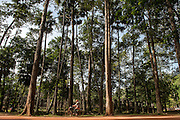A woman rides her bicycle along the tree lined roadway that borders Bayon temple.