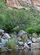 Tranquility along Bear Creek, Bear Canyon, Tucson