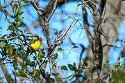 Wildlife photography from Laguna Atascosa national Wldlife Reserve, Texas, USA