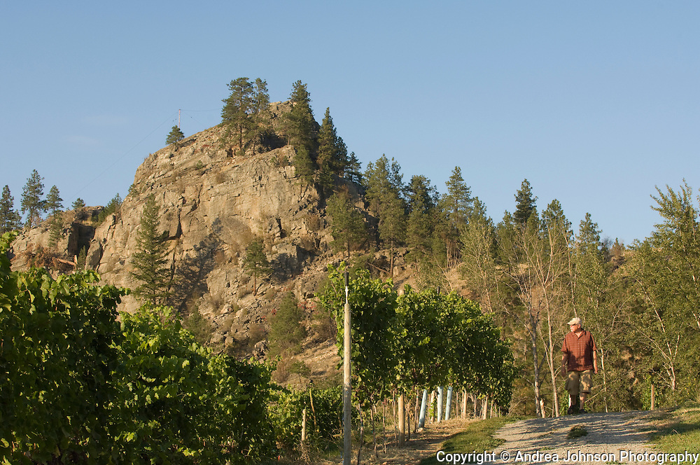 Vineyards overlooking Okanagan lake, British Columbia, Canada