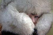 Yakutian boy at the school in Oymyakon prepared after his school hours to leave home with a warm fur cap. The area is extremely cold during the winter. Two towns by the highway, Tomtor and Oymyakon, both claim the coldest inhabited place on earth (often referred to as -71.2°C, but might be -67.7°C) outside of Antarctica. The average temperature in Oymyakon in January is -42°C (daily maximum) and -50°C (daily minimum). The images had been made during an outside temperature in between -50°C up to -55°C. Oymyakon, Oimjakon, Yakutia, Jakutien, Russian Federation, Russia, RUS, 20.01.2010