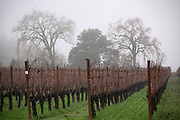 Elhers winery & estate vineyard, Napa, California