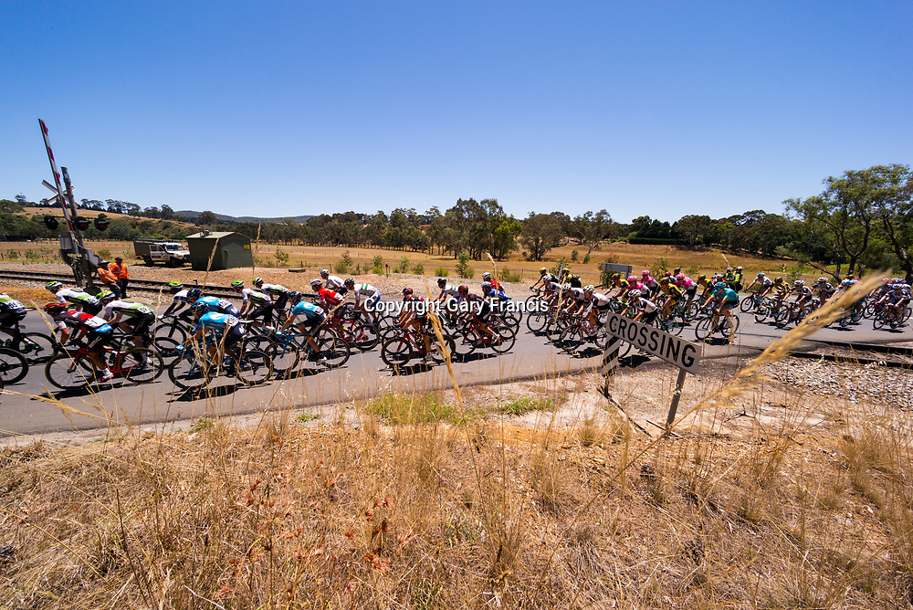 The Peloton cross the rail crossing at Balhannah during Stage 2, Unley to Stirling, of the Tour Down Under, Australia on the 17 of January 2018 ( Credit Image: © Gary Francis / ZUMA WIRE SERVICE )