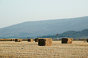 Israel, Jordan Valley, Kibbutz Ashdot Yaacov, Wheat field. Bales of straw after harvest