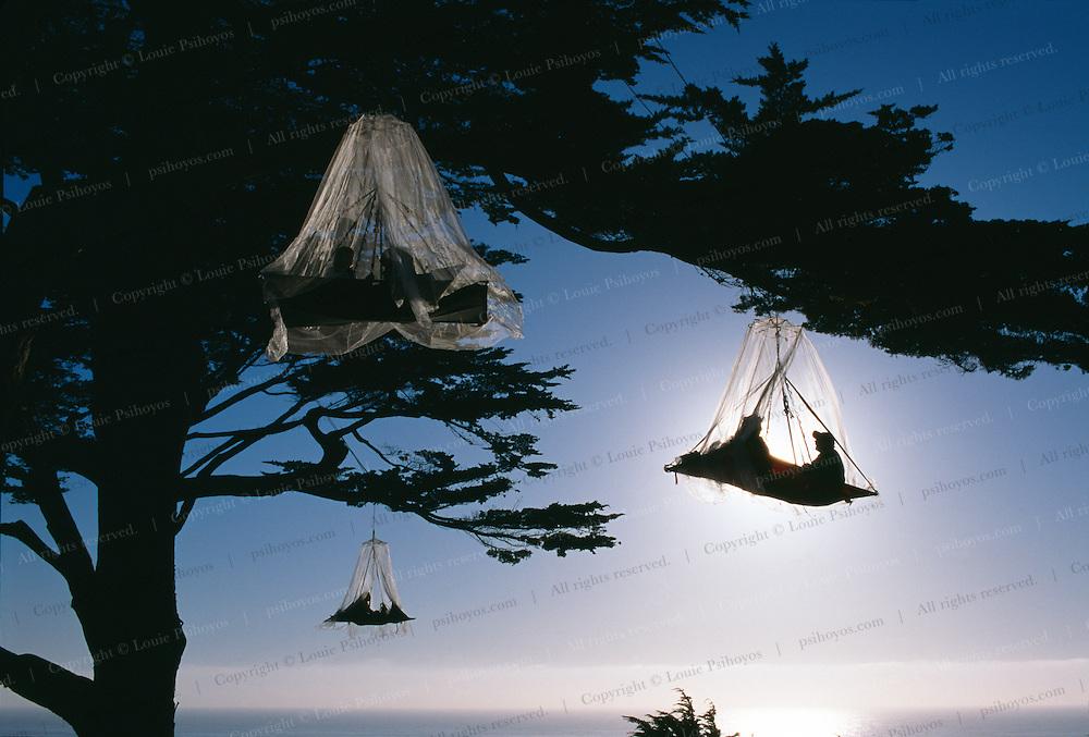 Tree Climbing 0030 Three Porta Ledges 3 On Ocean With Fog