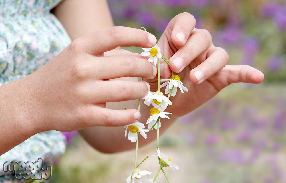 Pre-teen Girl Making Necklace of Flowers close-up