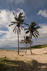 Chile, Easter Island: Anakena Beach, a white coral sand beach with palm trees and several restored moai or statues..Photo #: ch289-33860.Photo copyright Lee Foster www.fostertravel.com lee@fostertravel.com 510-549-2202