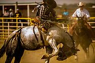 Crow Fair, Crow Fair Indian Rodeo, Crow Indian Reservation, Montana, saddle bronc rider