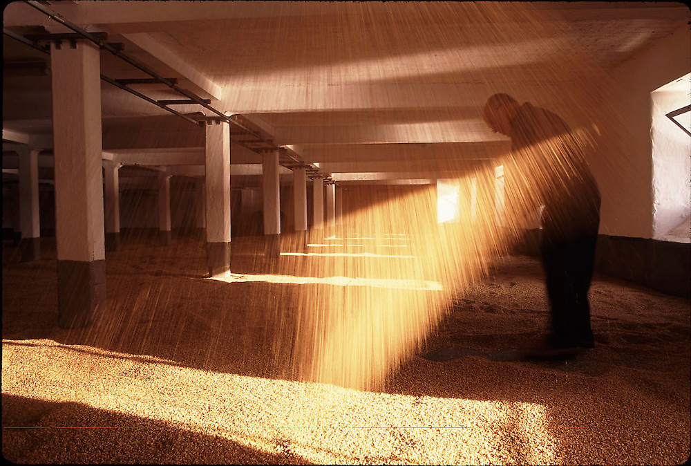 Turning the malted barley at Laphroaig Distillery, Isle of Islay, Scotland