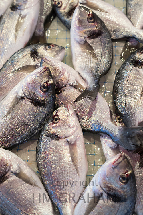 Daurade fish - Orate -  on display for sale on market stall at old street market - Mercado -  in Ortigia, Syracuse, Sicily