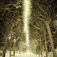 Sepia toned photograph of the alley of trees in front of the Jardin des Plantes in Paris, France.