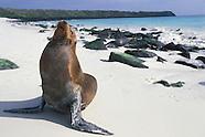 2005 - GALAPAGOS ISLANDS