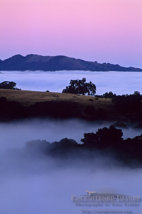 Coastal Fog, hills, and trees at dawn, Cachaqua Road, above Carmel Valley, Monterey County, California