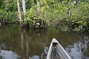Canoe moving through flooded Igapo forest.<br /> Cocaya River. Eastern Amazon Rain Forest. Border of PERU &ECUADOR. South America