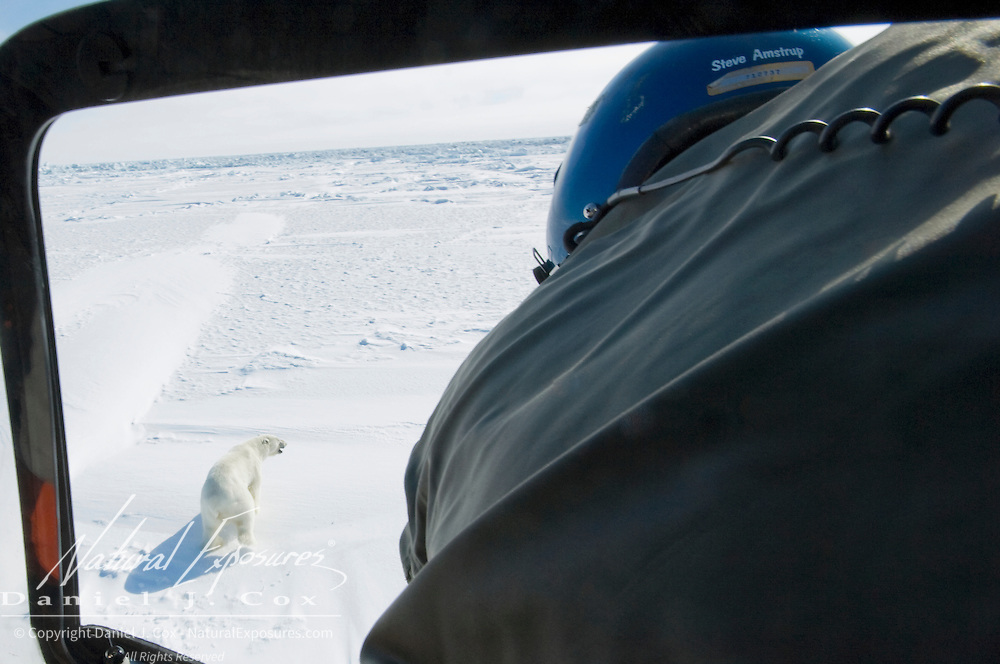 Steve Amstrup, lead biologist for the USGS, leans out of a research helicopter to take aim at a running polar bear to be darted for data collection. Beaufort Sea ice, Kaktovik, Alaska