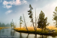 Trees and mist at sunrise along Firehole River,, Upper Geyser Basin, Yellowstone National Park, Wyoming/Montana.
