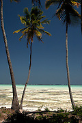 Jambiani, East Zanzibar, Zanzibar Archipelago, Tanzania, Southern East Africa..Looking through the tall palm trees and Idyllic sandy beach to the clear turquoise Indian Ocean...© Demelza Cloke.DVD0001