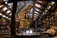 The National Museum of Natural History in Paris: Grand Gallery of Evolution