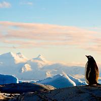 Zen Penguins Masters