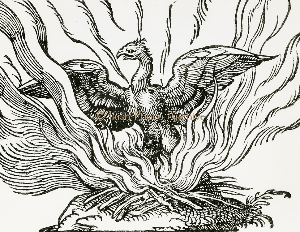 'The Phoenix a fabulous bird which at the end of life makes a nest which it sets on fire and burns itself to ashes, then comes to life again. Woodcut from a 1669 edition of ''Historiae animalium' 'by Conrad Gesner.'
