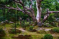 Japon, île de Honshu, région de Kansaï, Kyoto, temple Hosen-in // Japan, Honshu island, Kansai region, Kyoto, Hosen-in temple