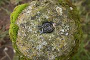 dead bird chick fallen from nest