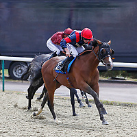 Trip To Paris and Ryan Moore winning the 2.40 race